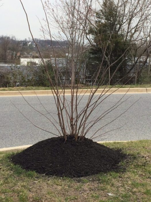 Don't over mulch!