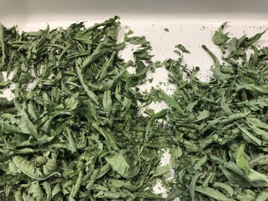 The lemon verbena is dried and crispy