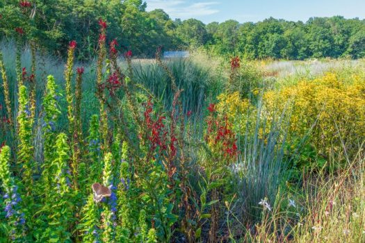 A picture perfect native garden with a mix of native plants