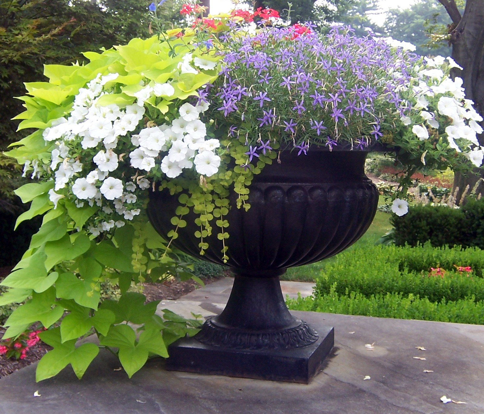 Containers With Pizazz ! Not Your Ordinary Container! The Garden