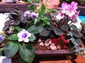 Miniaturer Gardens