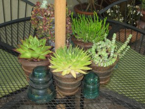More succulents clustered on a table