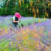 Lavender Fields Forever-Phenomenal!