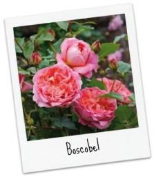 Boscobel_Pol