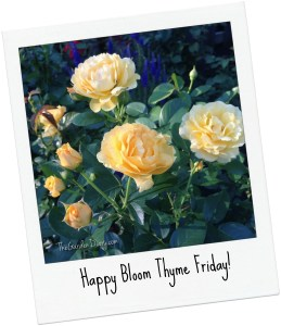 Happy Bloom Thyme Friday_Yellow