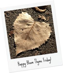Bloom Thyme Friday Leaf