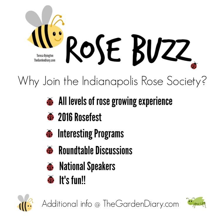 _Rose Buzz_IndyRoseSoc
