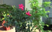 Landscaping plans your garden