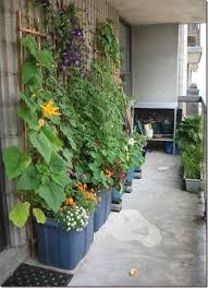 Grow fruit and vegetables in containers on your balcony