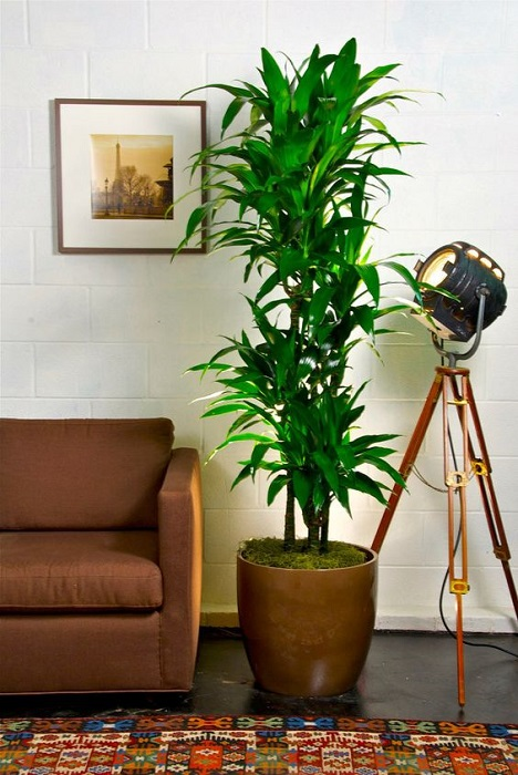Easy Look After House Plants