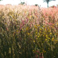Meadow Plants and Flowers