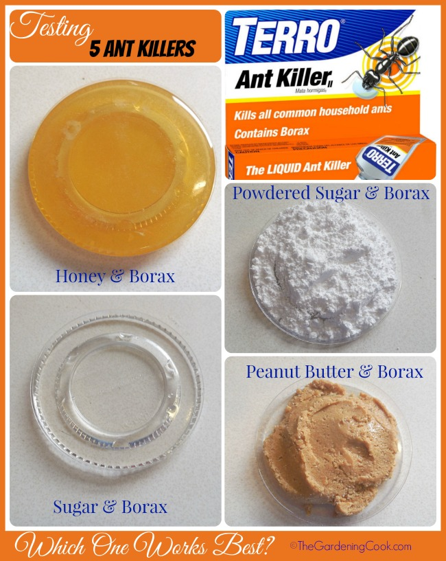 Home Made Borax Ant Killers Test