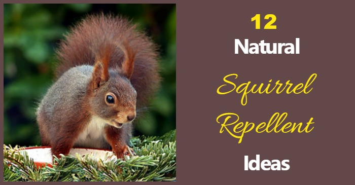 Natural Squirrel Repellent Ideas  Keep the Critters out