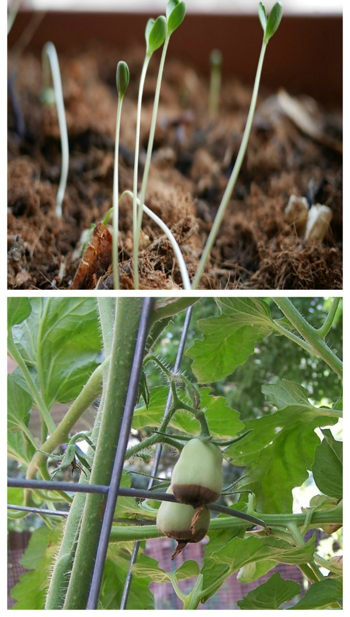 Vegetable Garden Problems And Solutions Troubleshooting Your Garden