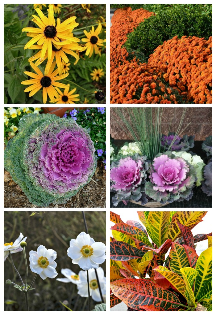Fall Blooming Perennials And Annuals For A Bold Pop Of Color