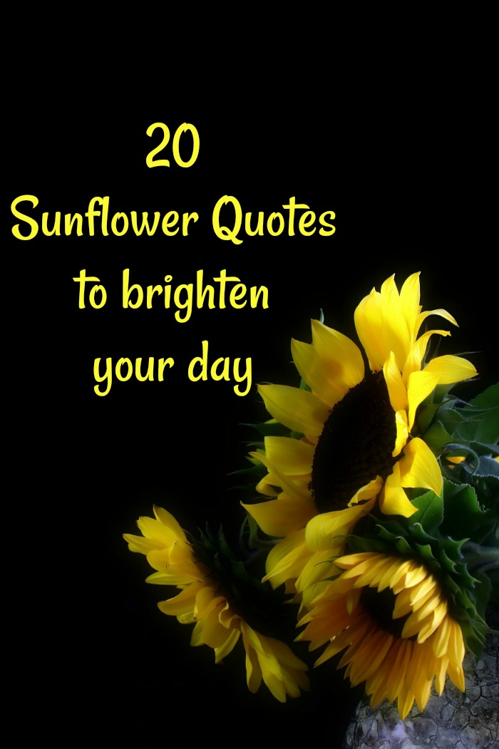 Sunflower Love Quotes : sunflower, quotes, Sunflower, Quotes, Sayings, Images