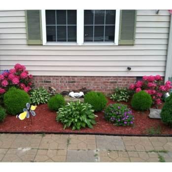 plants near house