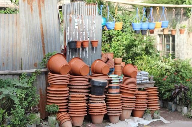 garden containers for avocados