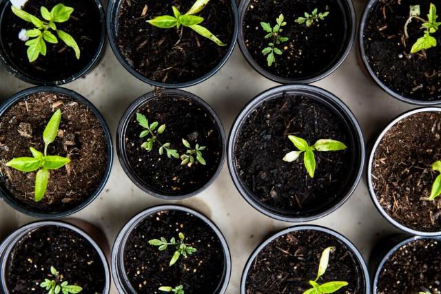 vegetables in pots gardening