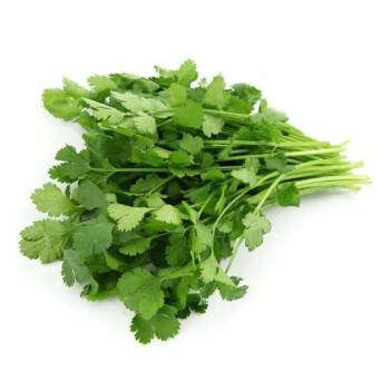 slow-bolting cilantro - how to grow cilantro from seed