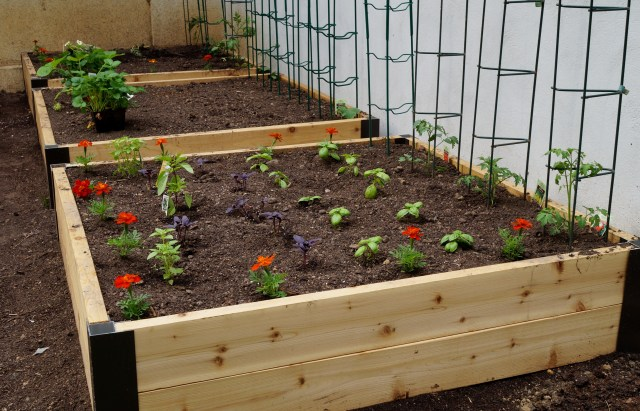 raised garden bed 4