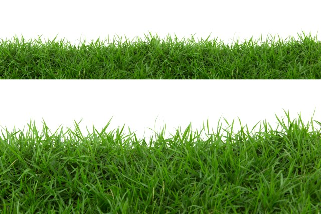 grass - what to compost