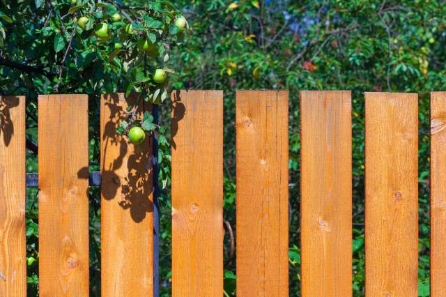 apple tree fence