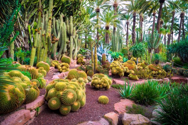 How to Grow Cactus Indoors & Outdoors