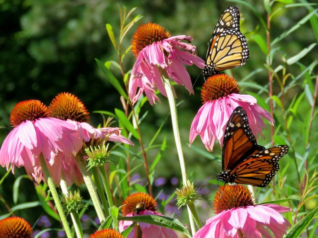 Fall Flower Pollinators