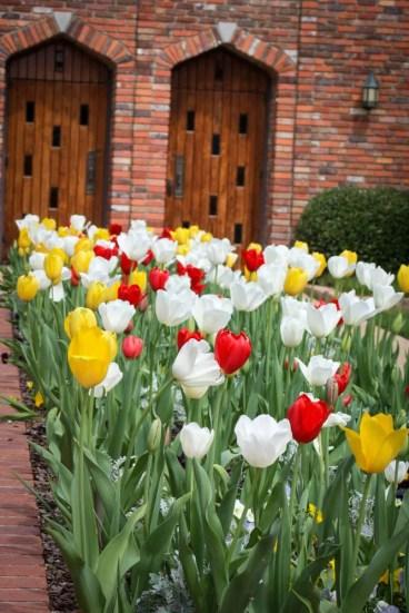 tulip uses