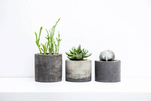gardening pots for daffodils