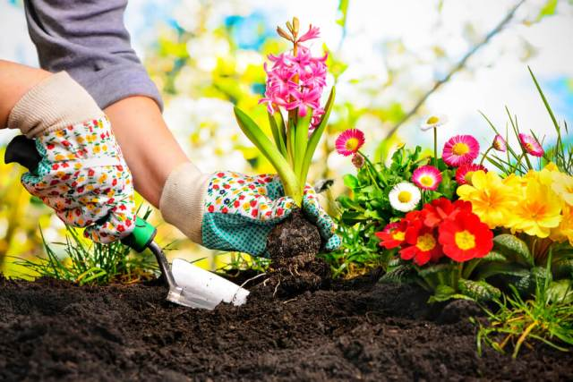 Most Common Gardening Mistakes