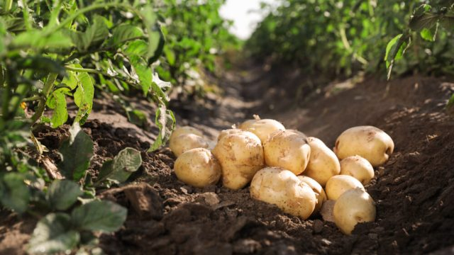 planting crops - most common gardening mistakes