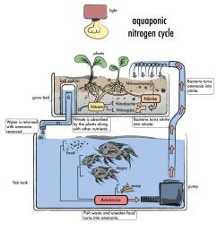 how to build an aquaponics system [ 975 x 998 Pixel ]
