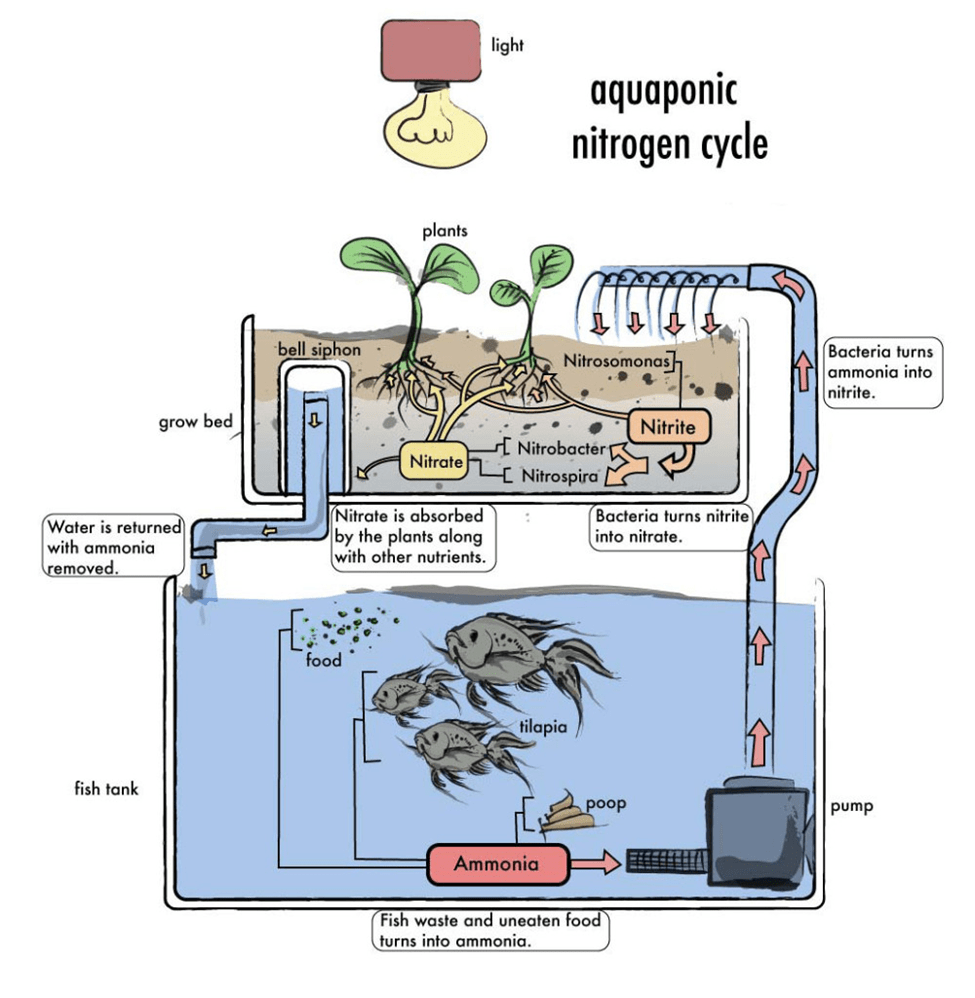 hight resolution of how to build an aquaponics system