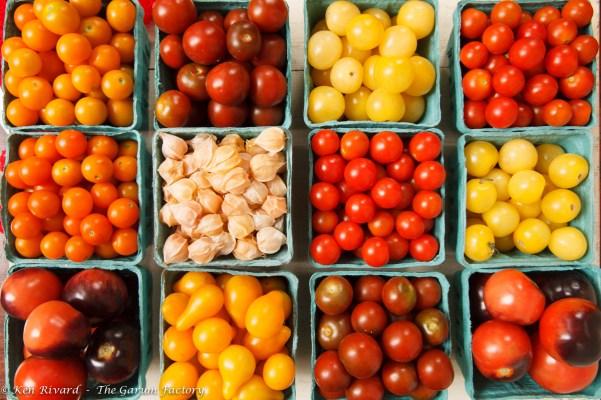 Tomato and Burrata Salad-1