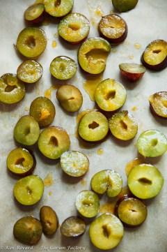 Fig, Plum and Hazelnut Tart-512-8801