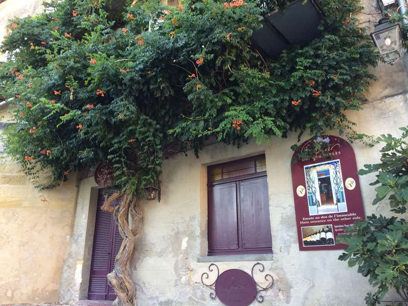 The fantastic bougainvillea on the restaurant wall