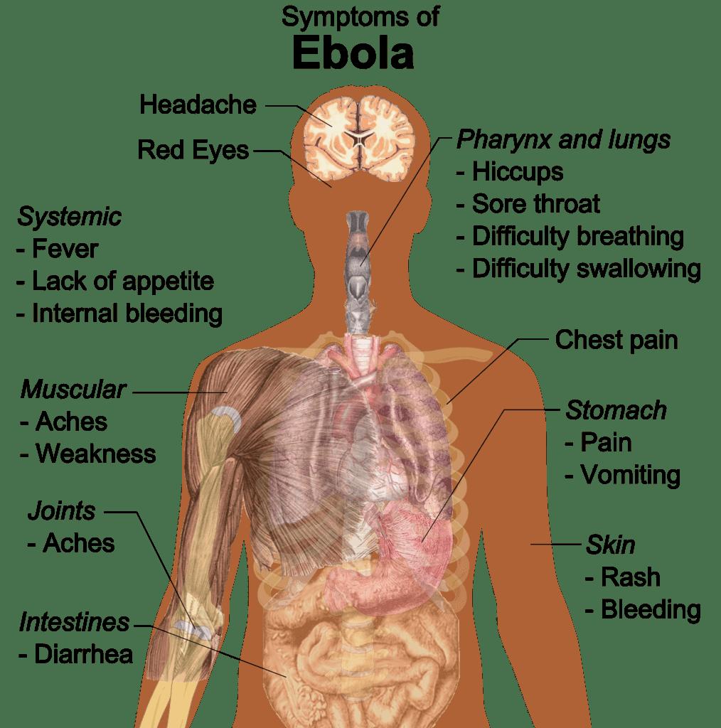 hight resolution of ebola virus disease epidemic