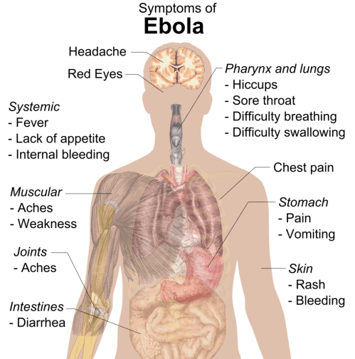 small resolution of ebola virus disease epidemic