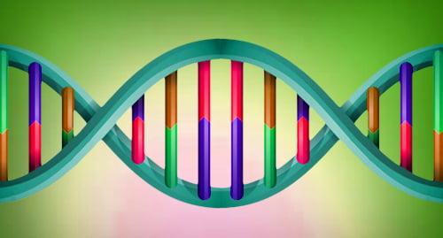 DNA Gay