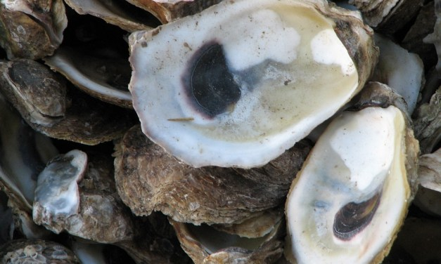 Sympathy for the Oysters:  The Closing of the 2019-20 Oyster Season