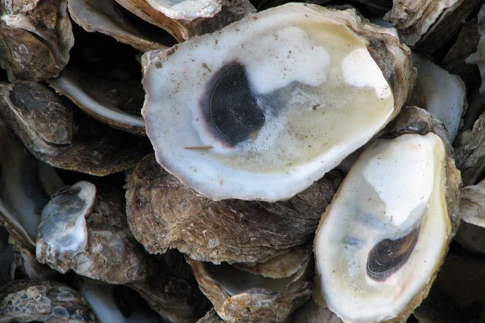 Coast Residents Concerned With New Oyster Farm