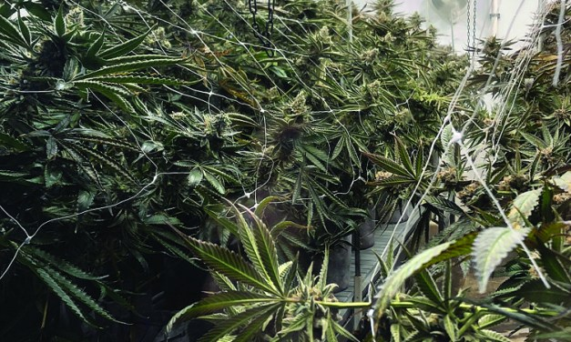Why We Need To Vote For Medical Marijuana Initiative 65