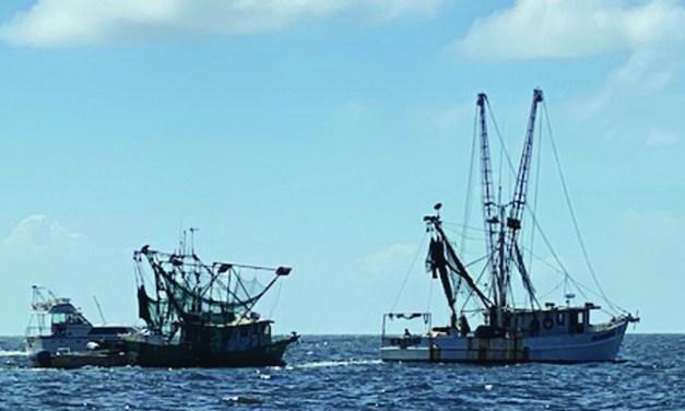 Mississippi Shrimp Season Opens June 10