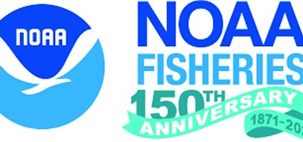 NOAA Fisheries Announces a Delay in the TED Use