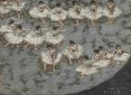 du 17 mars au 19 juillet 2015 Pierre Bonnard. Peindre l'Arcadie Musée d'Orsay Pierre Bonnard Danseuses © ADAGP - Musée d'Orsay, dist. RMN-Grand Palais / Patrice Schmidt