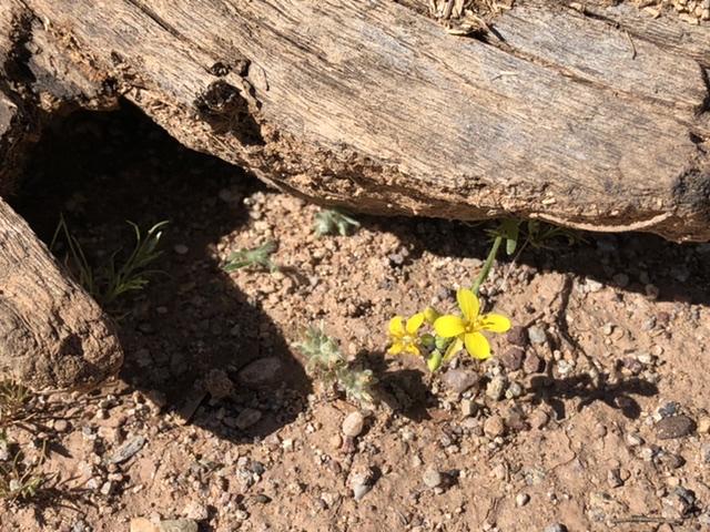 yellow flower near wood chunk