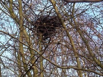 Crow Nest (Emőke Dénes) - René Descartes - beliefs, minimizing assumptions