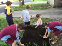 Salisbury children plant corn after school